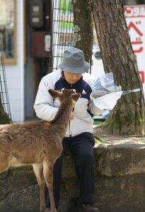 Wild deer - Miyajima